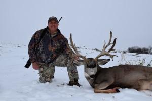mule-deer8